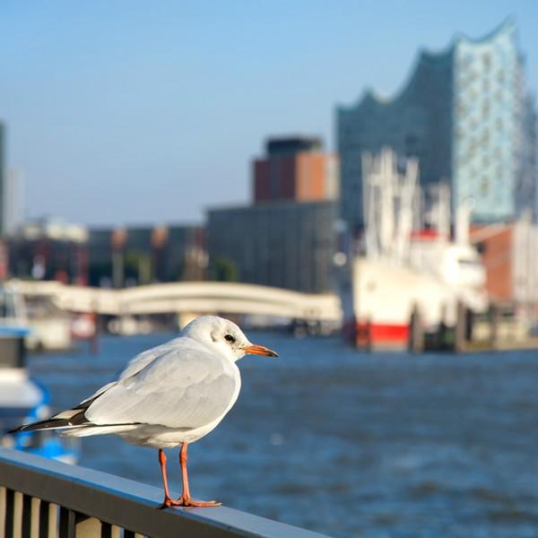 Gewerbeimmobilien Hamburg HafenCity 2