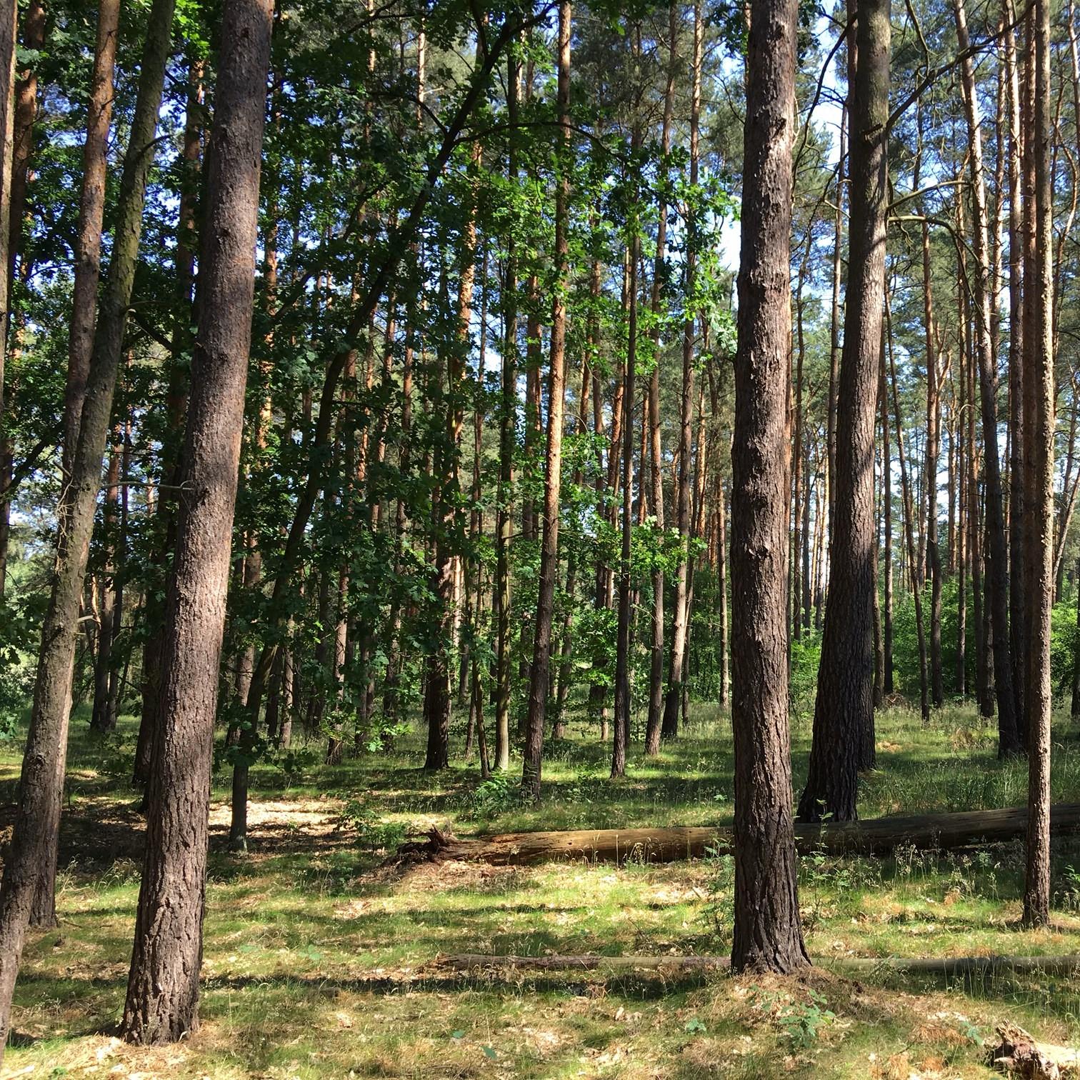 Wald kaufen