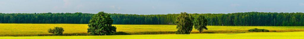 Investment in Land- und Forstimmobilien