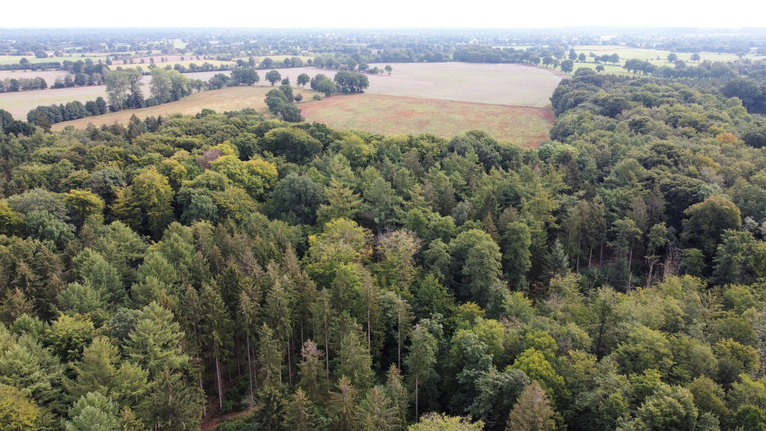 Forst nahe Hamburg