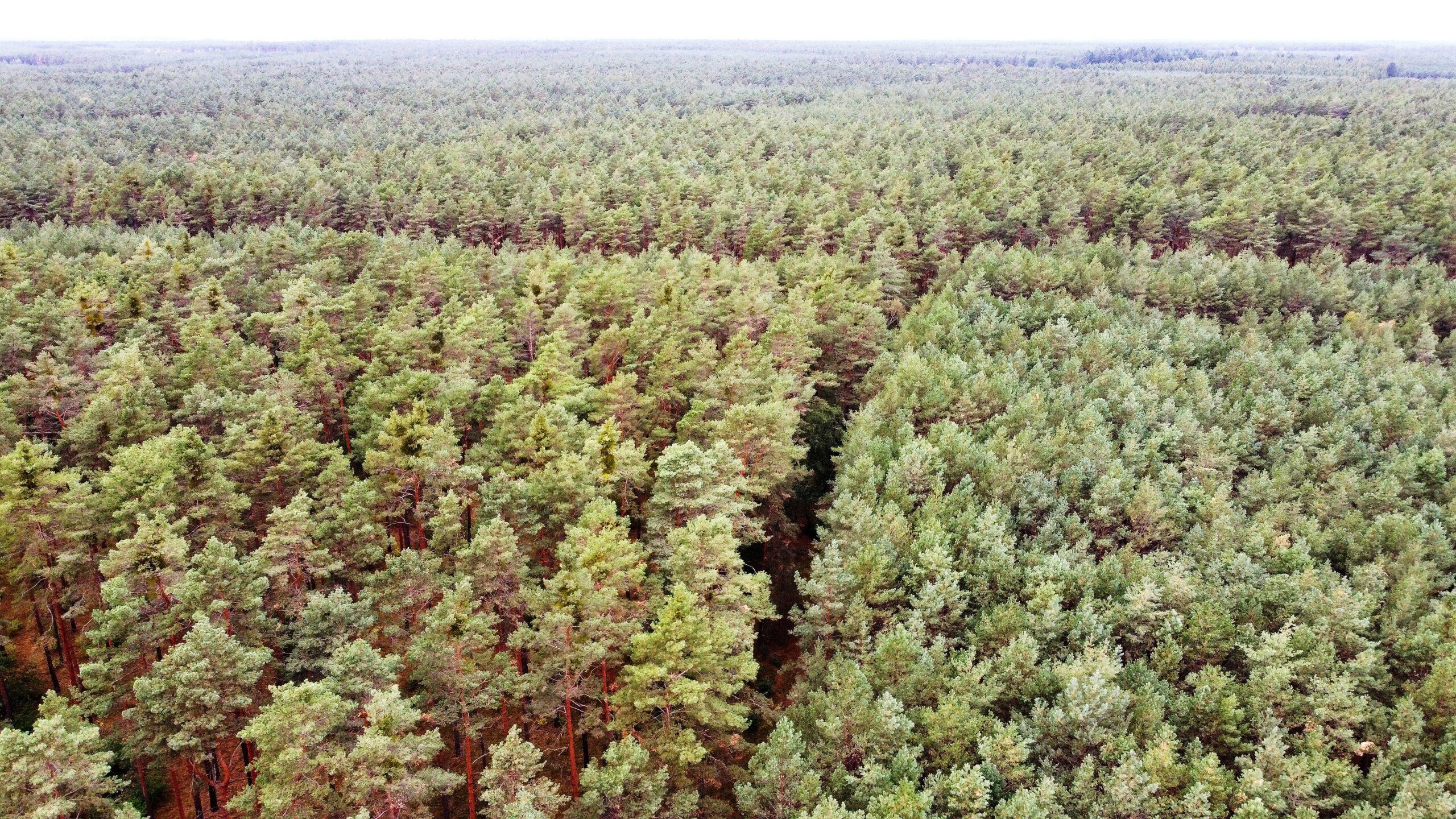 Forstbetrieb Brandenburg