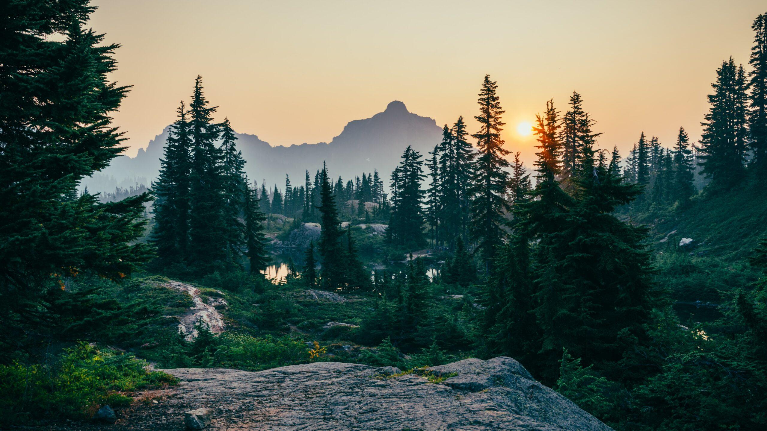 Forst und Eigenjagd