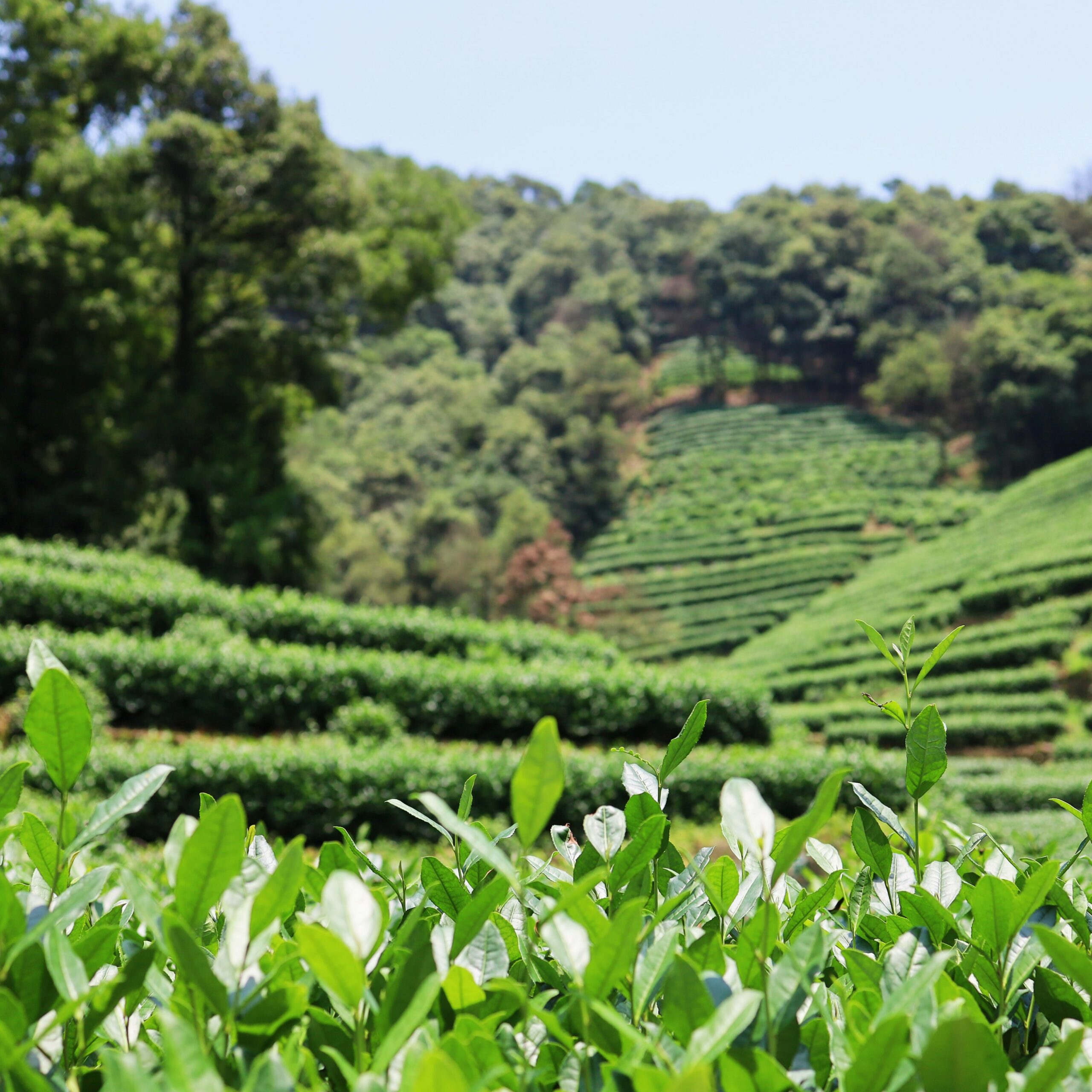 internationale Forst-und Agrarwirtschaft kaufe