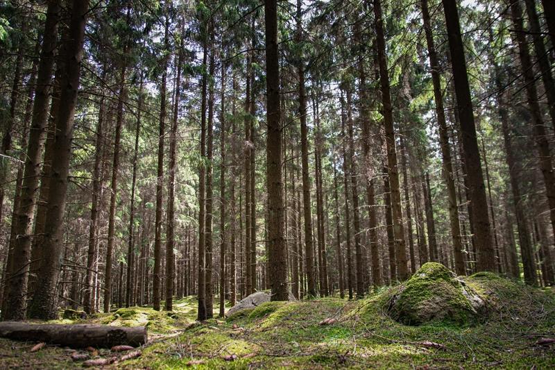 Forstbetrieb Neue Bundesländer