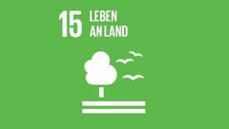 Accelerating Net Zero SDG 15
