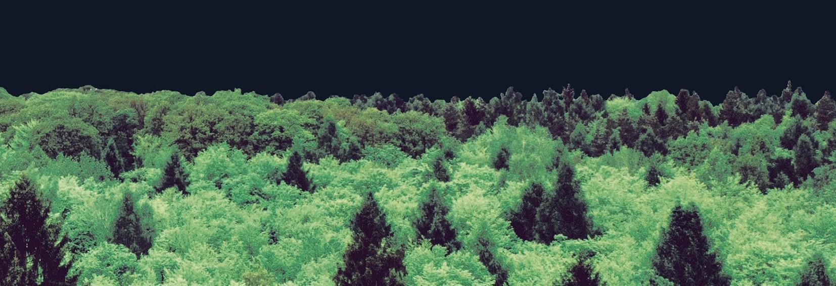 Forst Marktbericht 2021