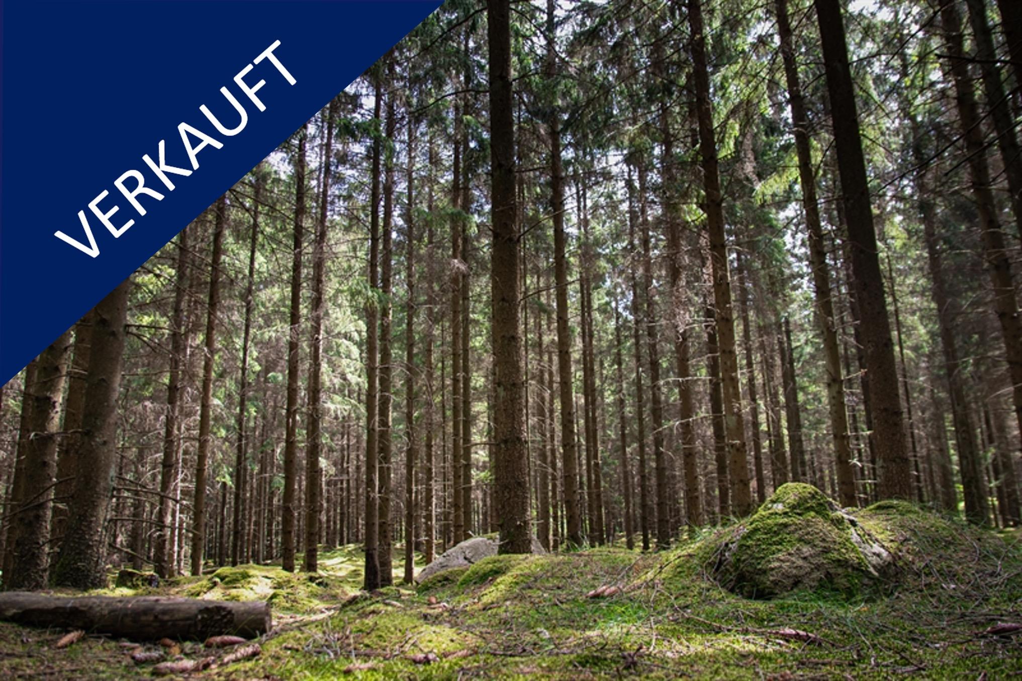 Forstbetrieb Neue Bundesländer Verkauft