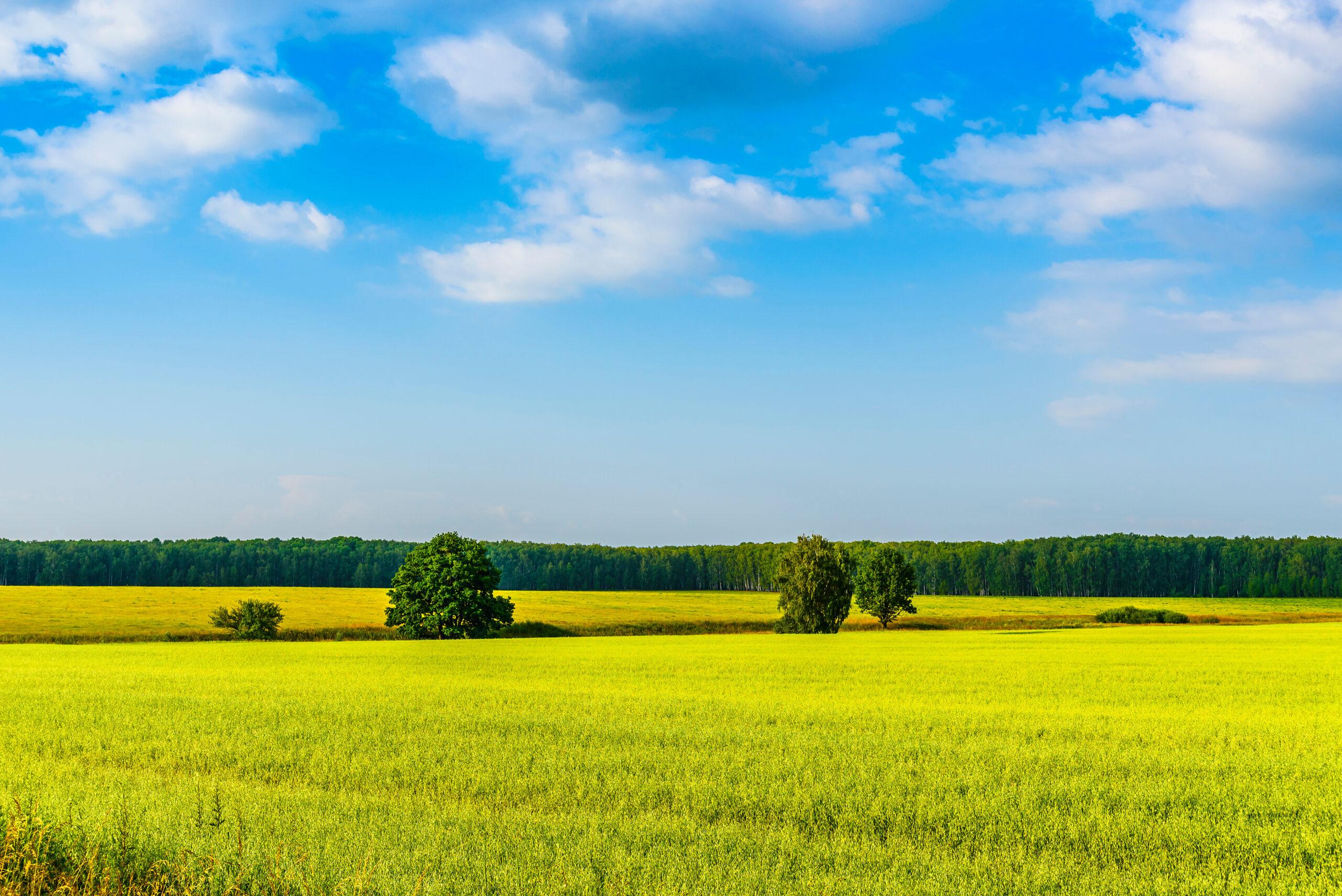 Shutterstock 1348525856 Land Forst